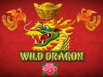 wild-dragon logo